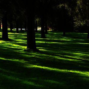 Теневые газоны