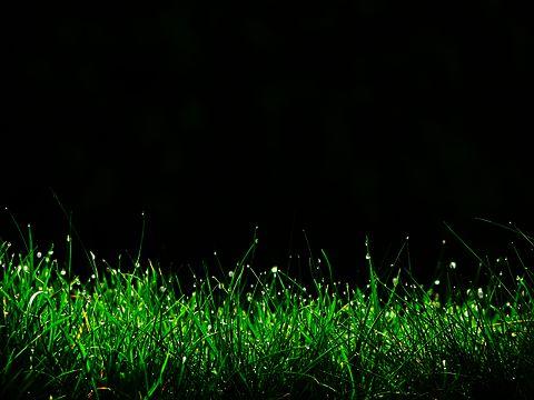 Почвопкровный газон