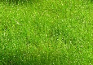 Элитные газоны