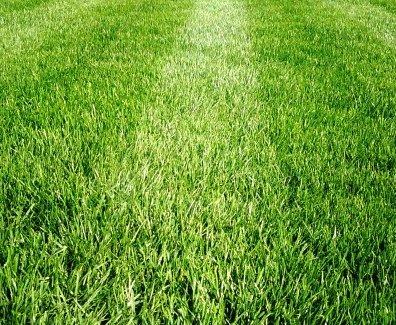 Футбольный газон