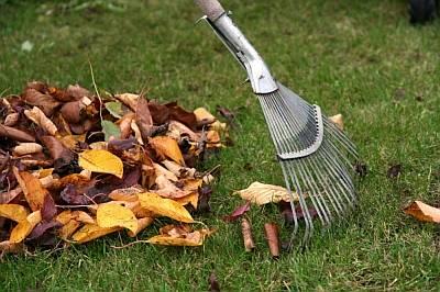 Особенности подготовки почвы для газона