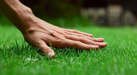 Расход семян газонной травы